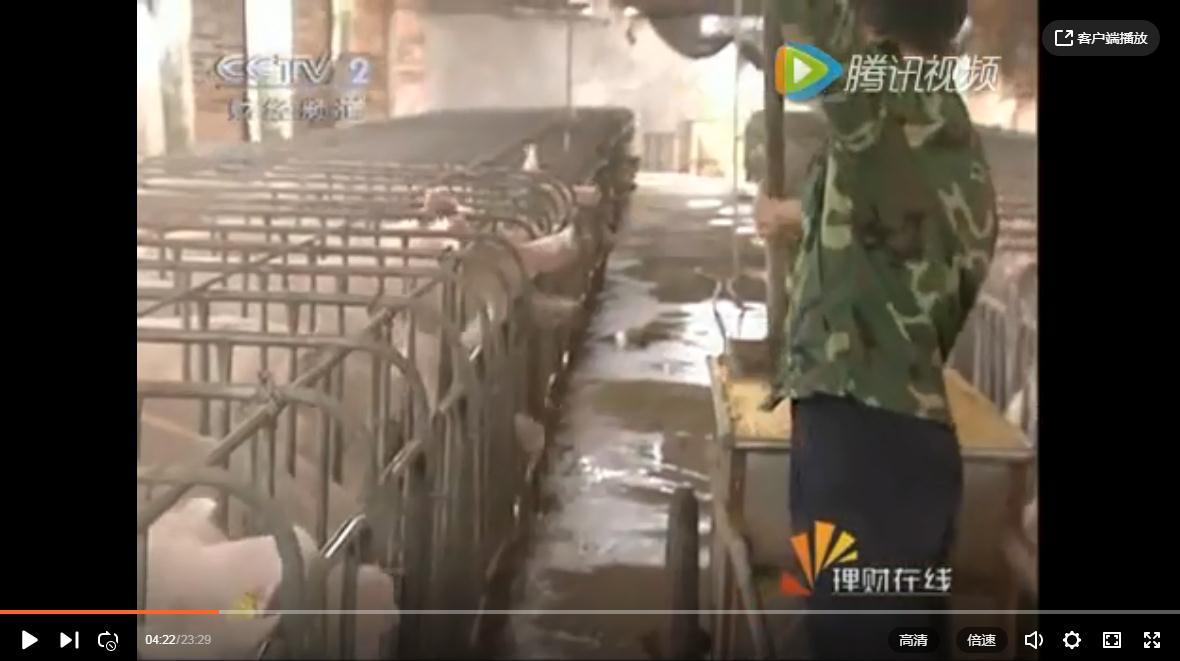 CCTV2理财在线-喝酸奶长大的猪